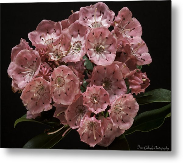 Laurel Metal Print