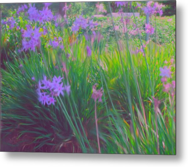 Lavender Field Metal Print by Maribel McIntosh