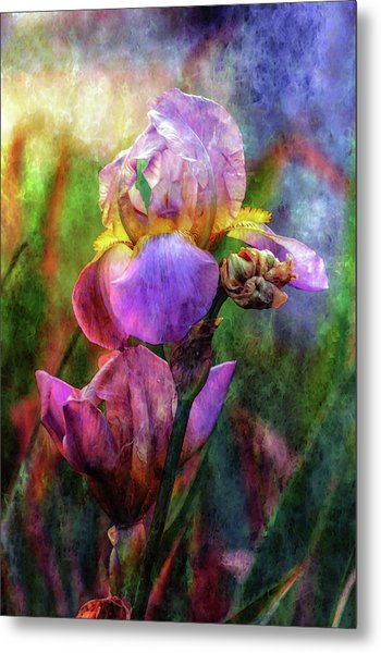 Lavender Iris Impression 0056 Idp_2 Metal Print