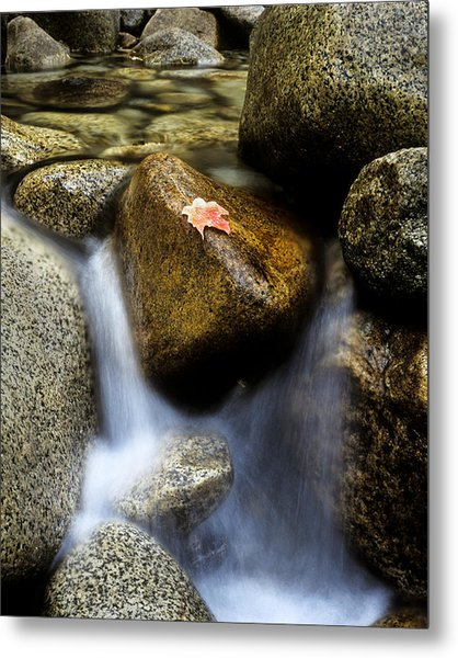 Leaf On Rock-yosemite Valley Metal Print