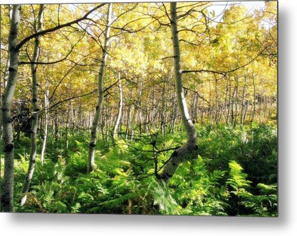Leaves And Ferns Metal Print by Caroline Clark
