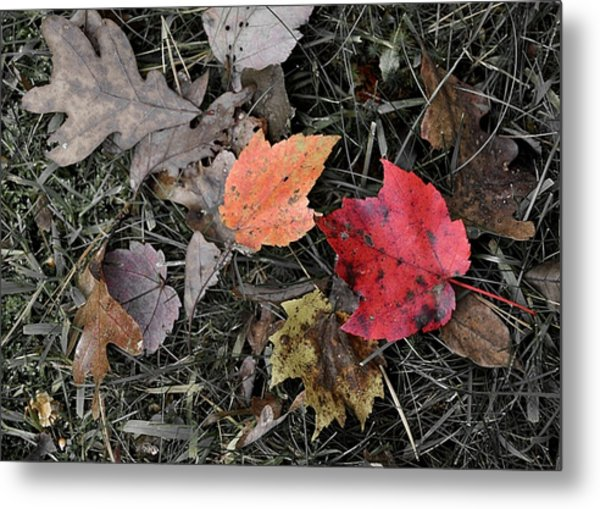 Leaves Are Falling Metal Print by JAMART Photography