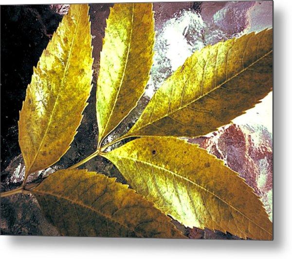 Leaves Of Gold Metal Print