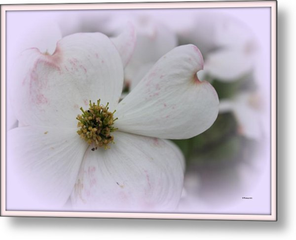 Legend Of The Dogwood Metal Print