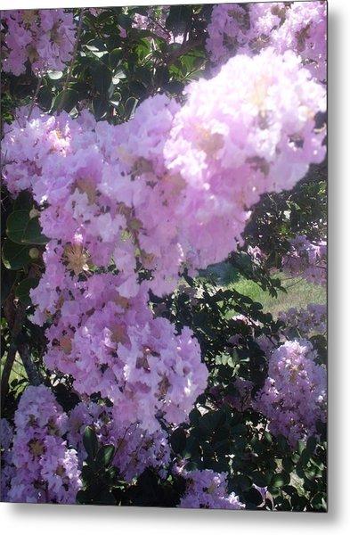 Light Purple Crape Myrtle Flowers Metal Print by Warren Thompson