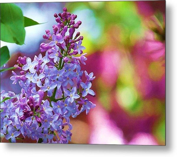 Lilacs 2012 Metal Print