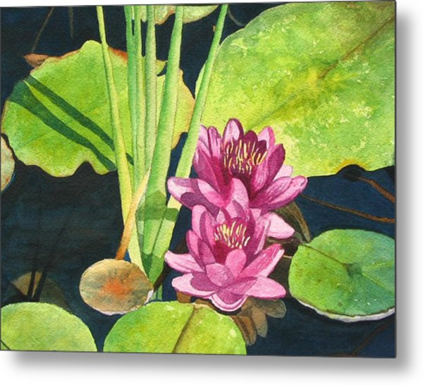 Lily Pads Metal Print by Sharon Farber