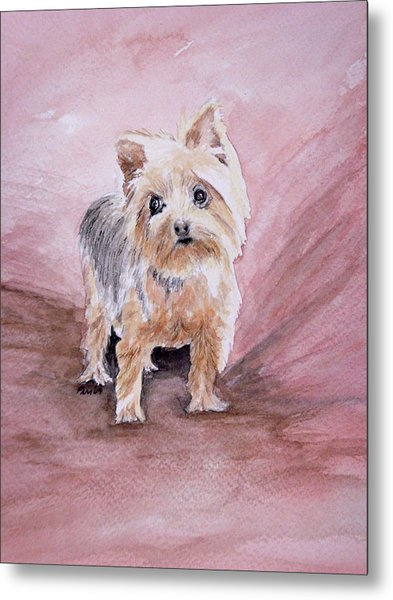 Little Boss Metal Print by Pam Hurst