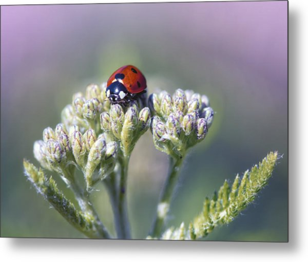 Little Lady On Top Metal Print by Bill Tiepelman