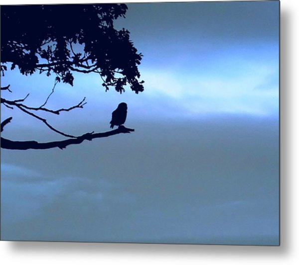 Little Owl Watching Metal Print