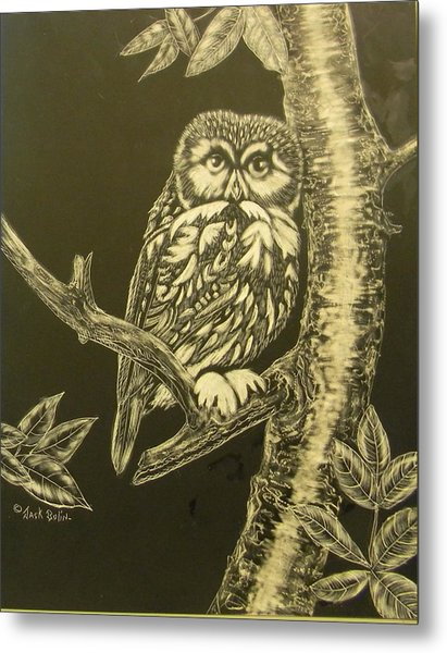 Little Saw-whet  Sold Metal Print
