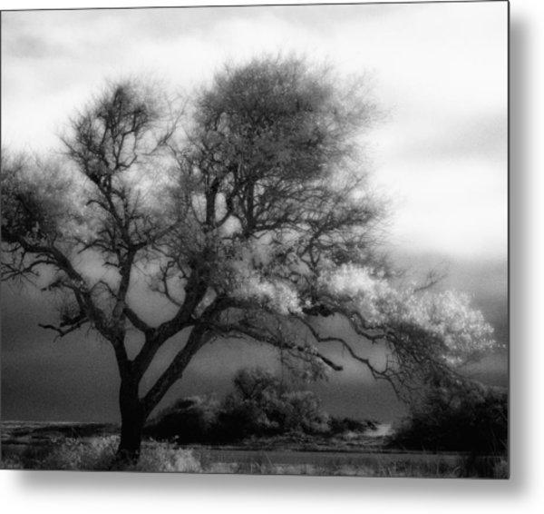 Lone Tree At Gulf Shores Metal Print