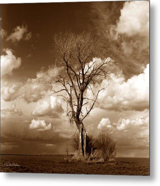 Lone Tree- Brown Tone Metal Print by Rich Stedman