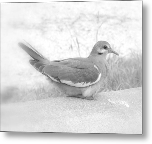 Lonely Dove Metal Print
