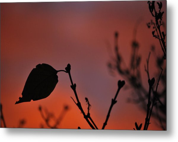 Lonely Leaf Metal Print by Matthew Fredricey