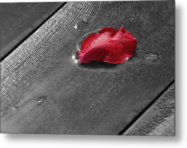 Lonely Petal Metal Print by Marrissia Ruth