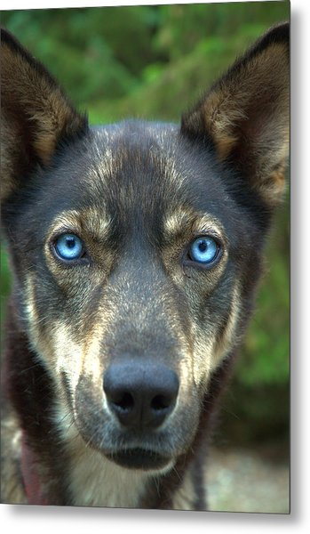 Look Into My Eyes... Metal Print