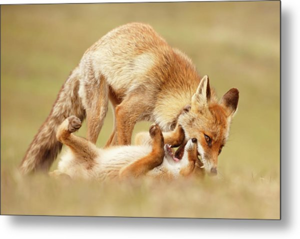 Love Bites - Mother Fox And Fox Kit Metal Print