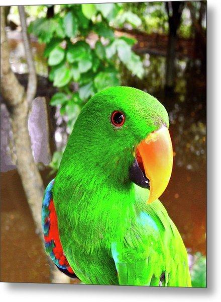 Male Eclectus Parrot II Metal Print