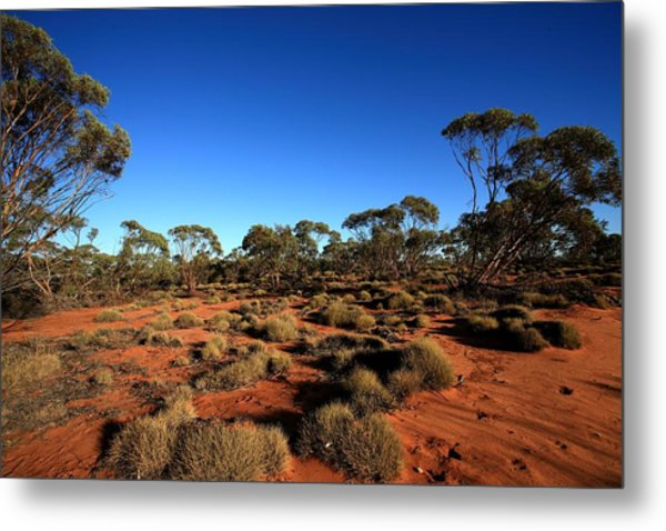 Mallee And Spinifex Metal Print by Tony Brown