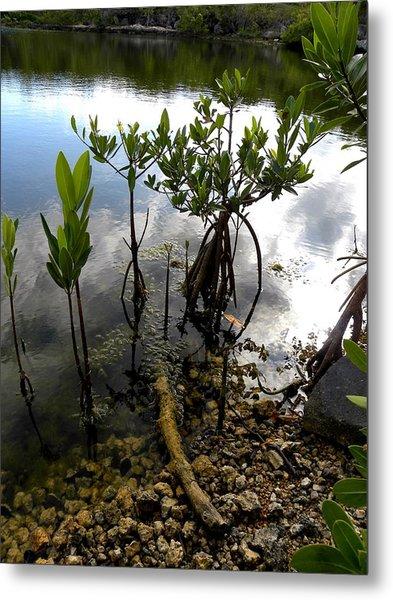Mangrove 2 Metal Print by Patricia Bigelow