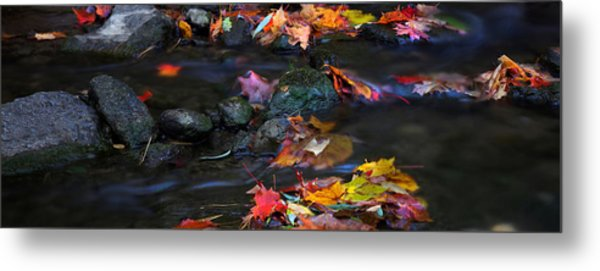 Maple Leaves-0009 Metal Print by Sean Shaw
