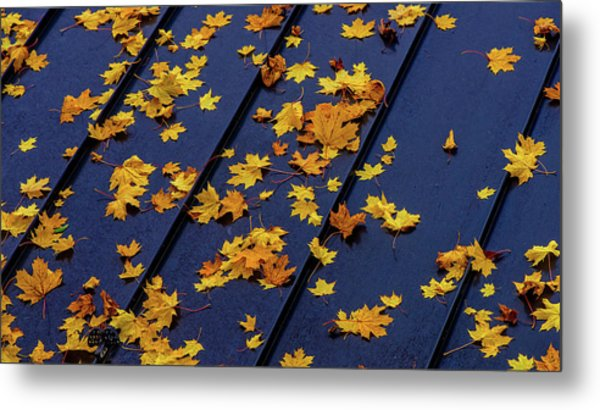 Maple Leaves On A Metal Roof Metal Print