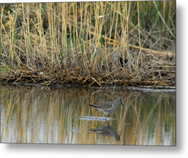 Marsh Bird 2 Metal Print