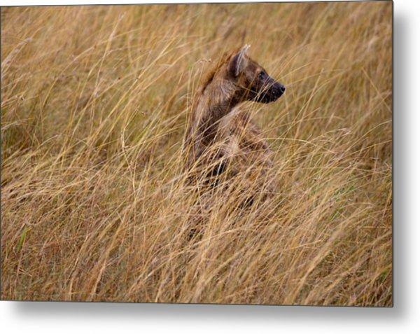 Masai Mara Hyena Metal Print by Paco Feria