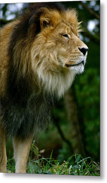 Master Of The Kingdom Metal Print by Sonja Anderson