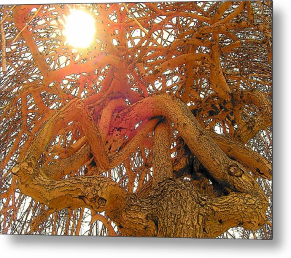 Medusa Arboraceous Metal Print by Robert  Collier