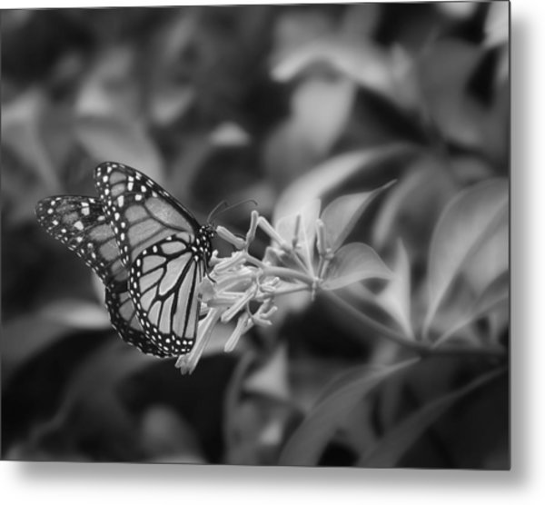 Monarch Butterfly In Black And White Metal Print