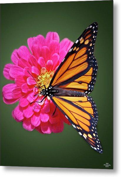 Monarch Butterfly On Pink Flower Metal Print