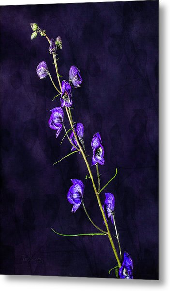 Monkshood Version 2 Metal Print
