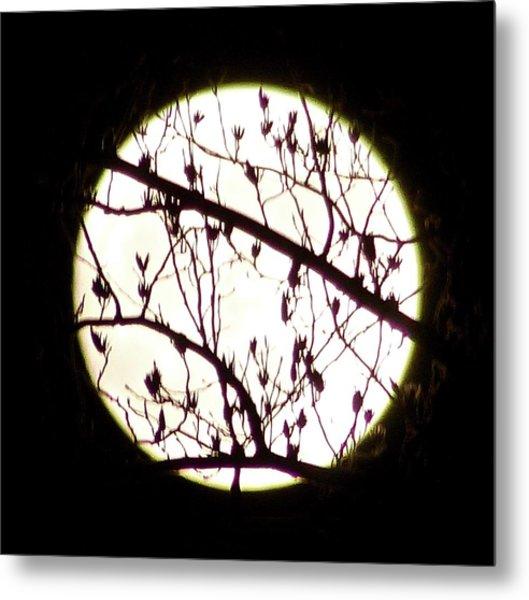 Moon Branches Metal Print