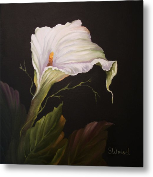 Moonlit Calla Lily Metal Print by Sherry Winkler