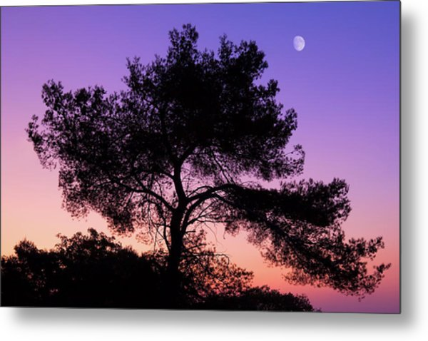 Moonlit Serenade Metal Print