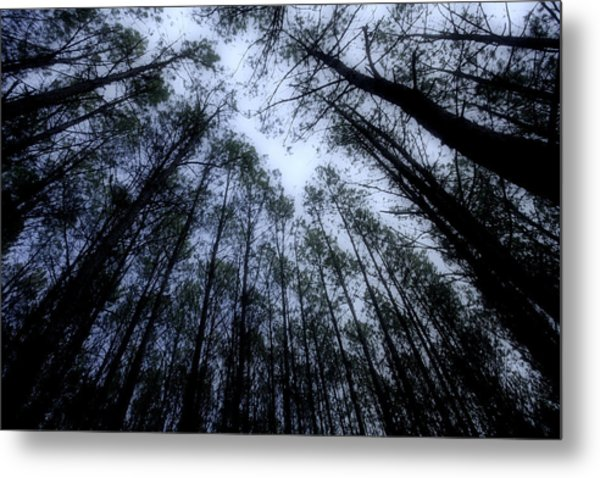 Moonlite Forest Metal Print
