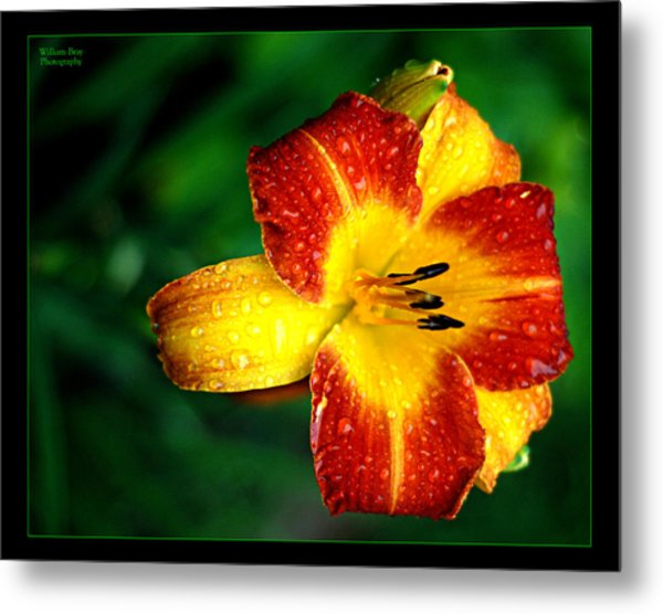 Morning Dew Metal Print by William Bray