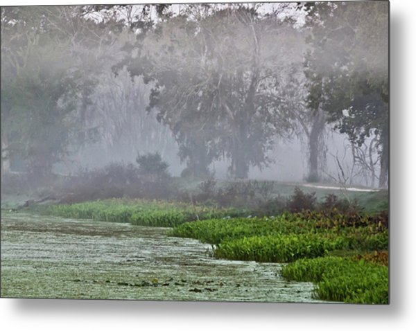 Morning Fog At Brazos Bend Metal Print