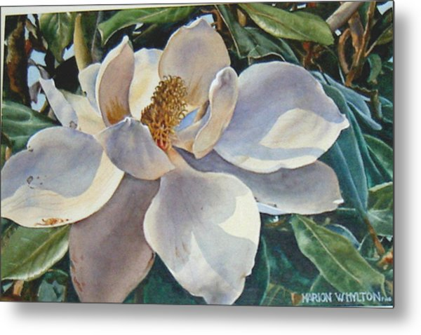 Morning Magnolia Metal Print by Marion  Hylton
