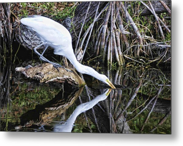 Morning Sip Metal Print