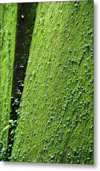 Moss Metal Print by Pramod Bansode