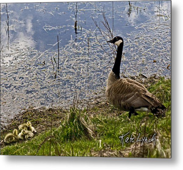 Mother Goose Metal Print by Kate Lynch