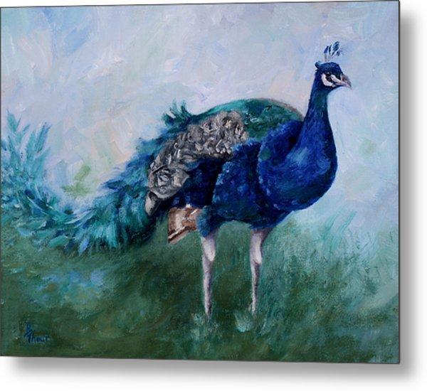 Mr. Peacock  Metal Print