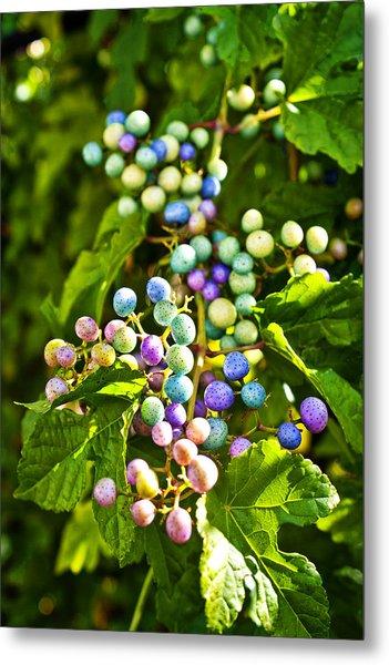 Multicolored Berry Vine Metal Print