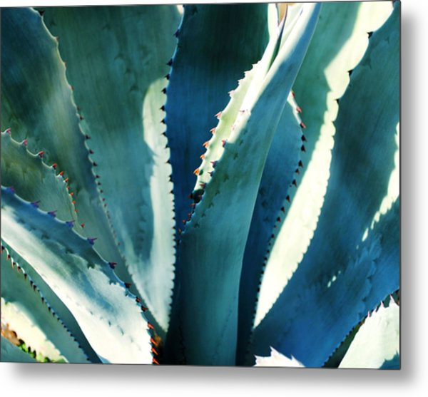 My Blue Agave Metal Print