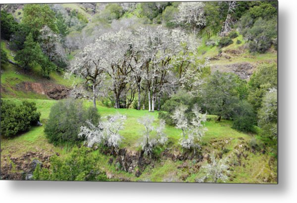 Mysterious Landscape In Sonoma County Metal Print