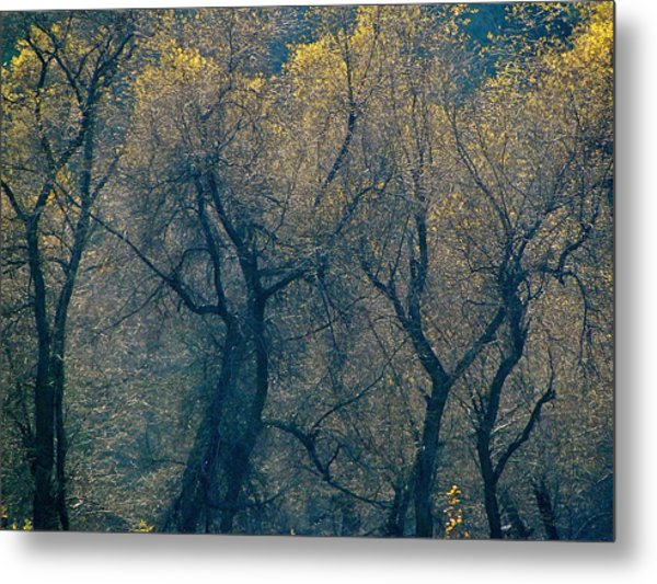 Mystic Trees Metal Print