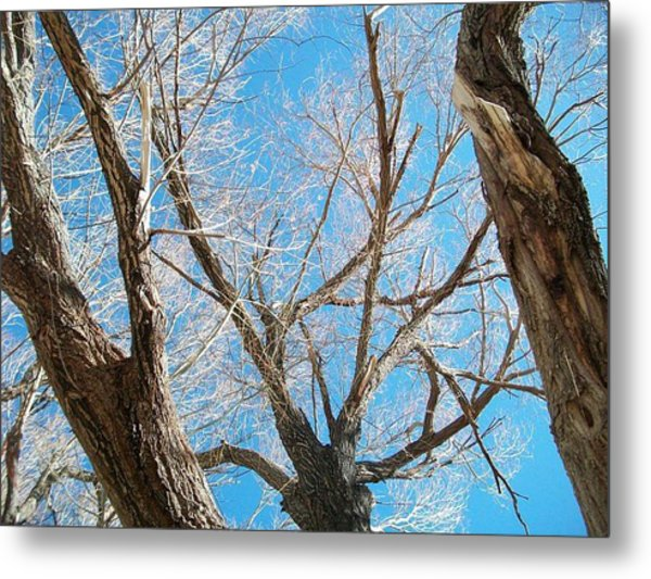 Naked Metal Print by Jacqueline Lewis